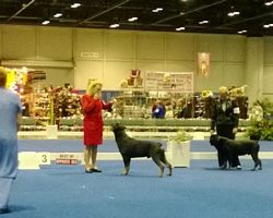 OH Breed ring Eukanuba 2013- Click for Larger View